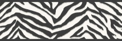 Mia Black Faux Zebra Stripes Wallpaper Border