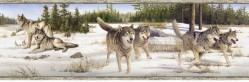 Shiloh White Wintry Wolf Portrait Wallpaper Border