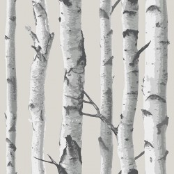 NU1650 Grey White Birch Tree Peel & Stick Wallpaper