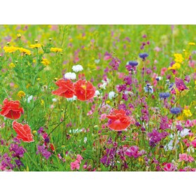 Fiesta De Flores Multicolor Flower Meadow Wallpaper