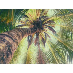 La Palmera Green Vertical Palm View Wallpaper